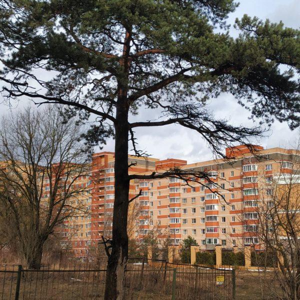 Купить жилье в Подмосковье: где и как лучше это сделать